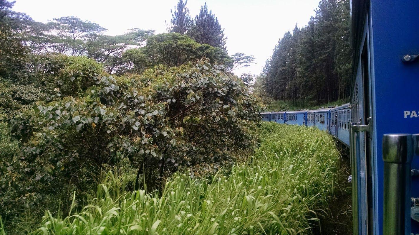 Viaje en un tren colonial de Kandy a Ella por las plantaciones de té: uno de los platos fuerte del viaje.