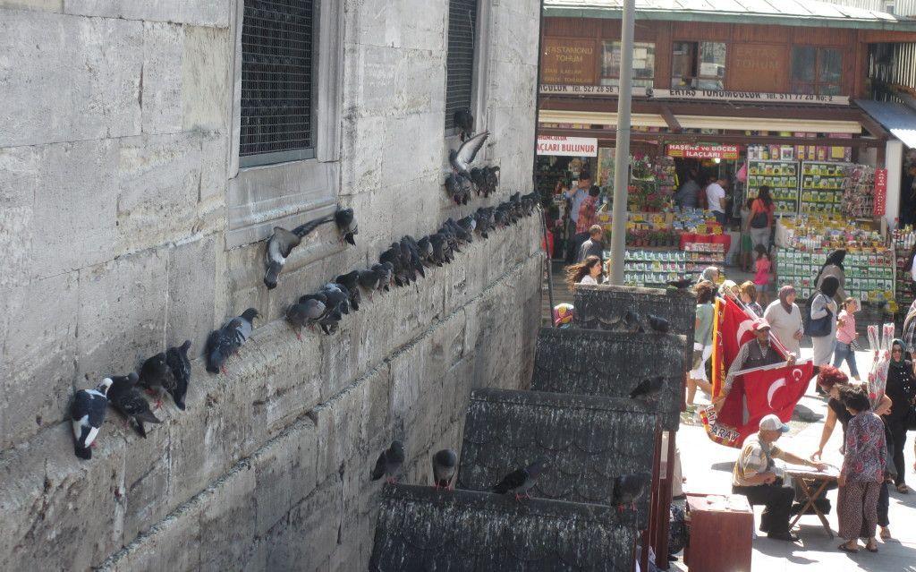 Palomas en Mezquita de Yuni