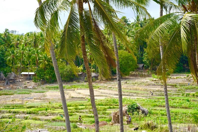 Mujeres trabajando en los campos en Baucau