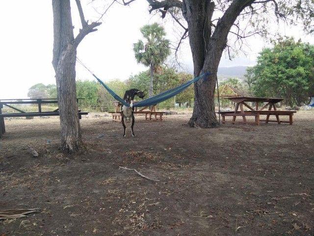 Eddie, la cabra adicta a la hamaca en Atauro Dive Resot