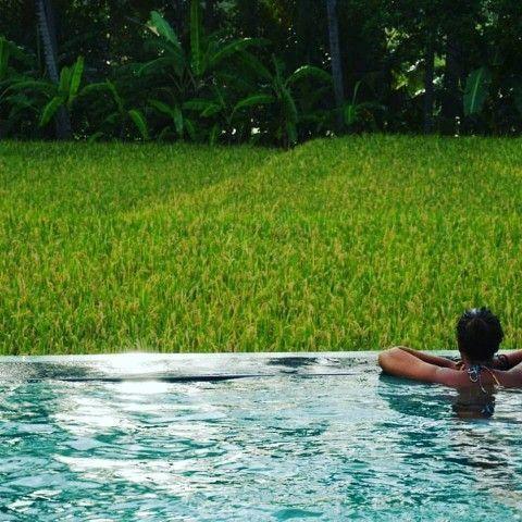 Las increíbles vistas a los campos de arroz desde la piscina infinita