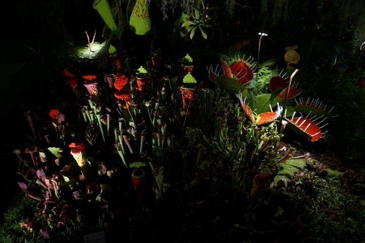 Flores carnívoras hechas de Lego (Cloud Forest)