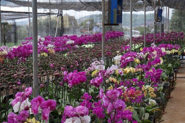 Granja de orquídeas.