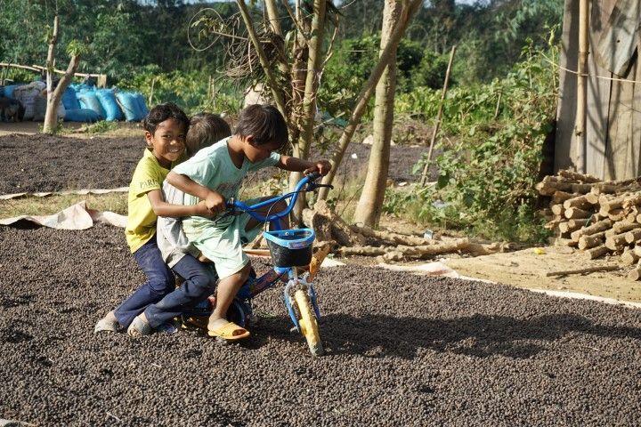 Niños jugando encima de los granos de café secando al sol