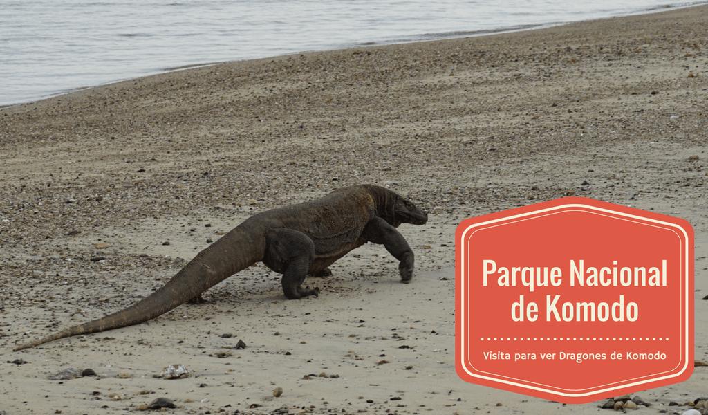 Dragón de Komodo en Parque Nacional de Komodo