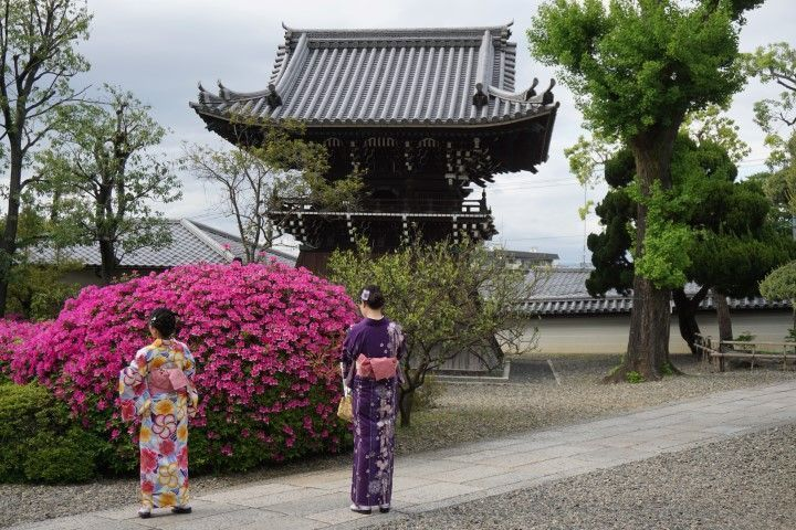 Turistas vestidas con su kimono. Es my común ver a turistas paseando por Kioto con kimono ya que se pueden alquilar por día.