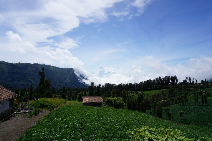 Llegada a Cemoro Lawang, estas eran las vistas de nuestro balcón. ¿Nada mal eh?