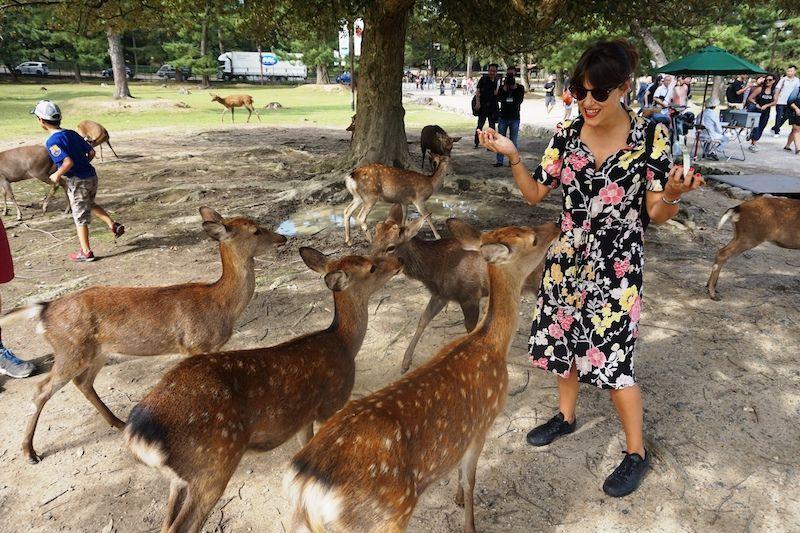 Los ciervos hambrientos de Nara