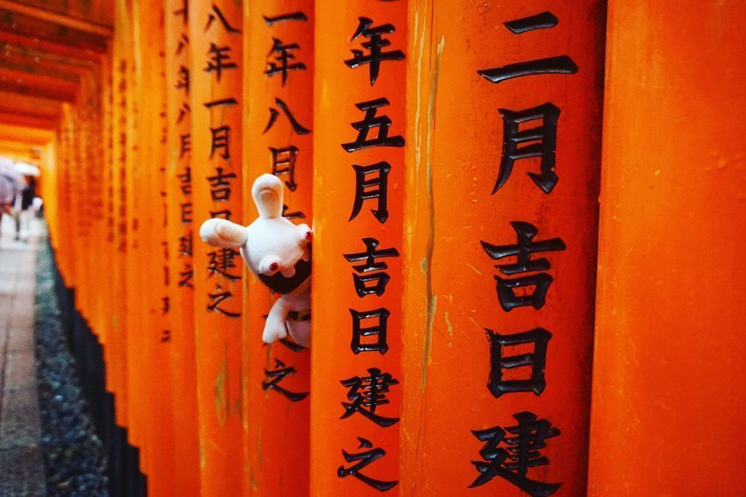 Yoko vigilando sigilosamente a otros turistas en Fushimi Inari-taisha (Kyoto)