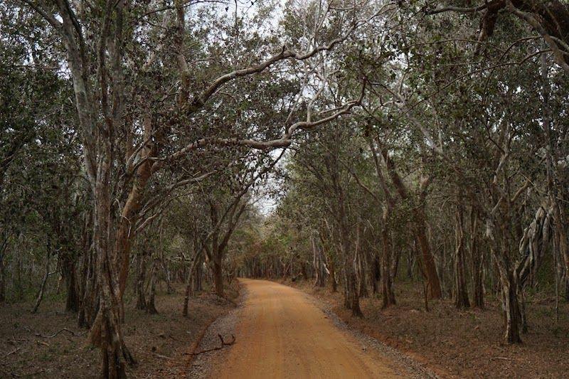 camino de wilpattu national park
