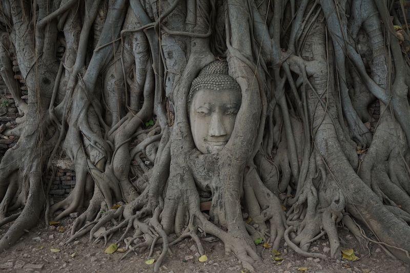 Detrás de esta cabeza de Buda y las raíces que la cobijan hay una historia que merece ser contada.