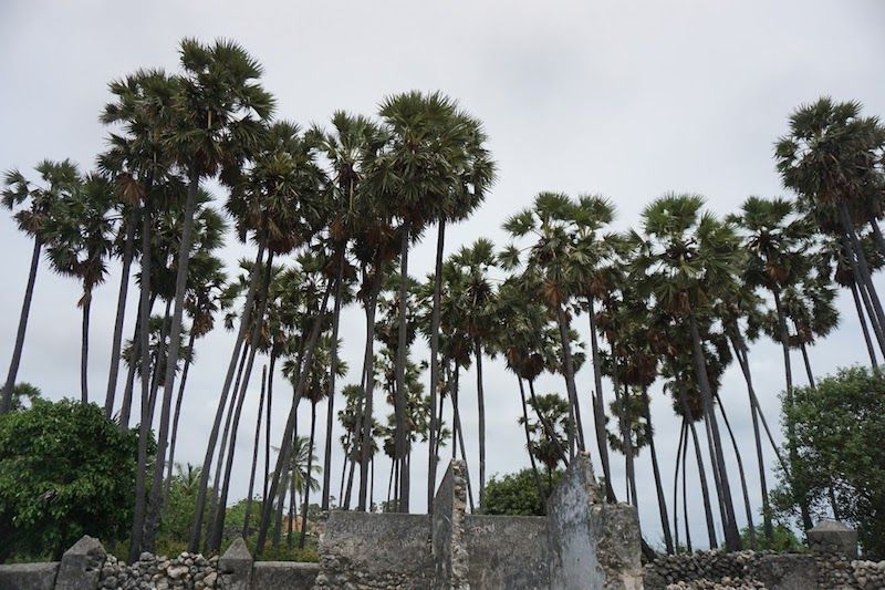 palmeras en la isla de Delft