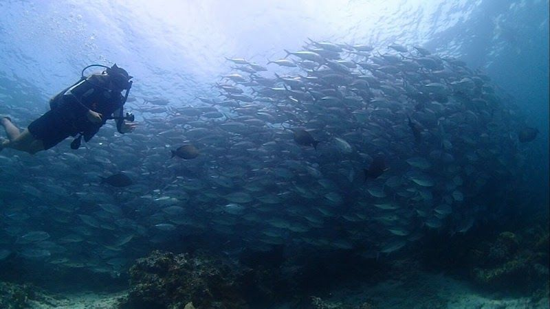 """Inês buceado en Sipadán: como no tenía palabras para lo que vivió ese día, os podemos contar que aparte de estos bancos de peces, la pared vertical de más de 600 metros (de la cual llegó """"sólo"""" hasta los 40) de coral y peces de mil colores, unas 30 tortugas y unos 15 tiburones ayudaron a que el día de 3 inmersiones (con sus respectivas paradas en la paradisíaca isla de Sipadan) hiciera que fuera un día inolvidable para ella."""
