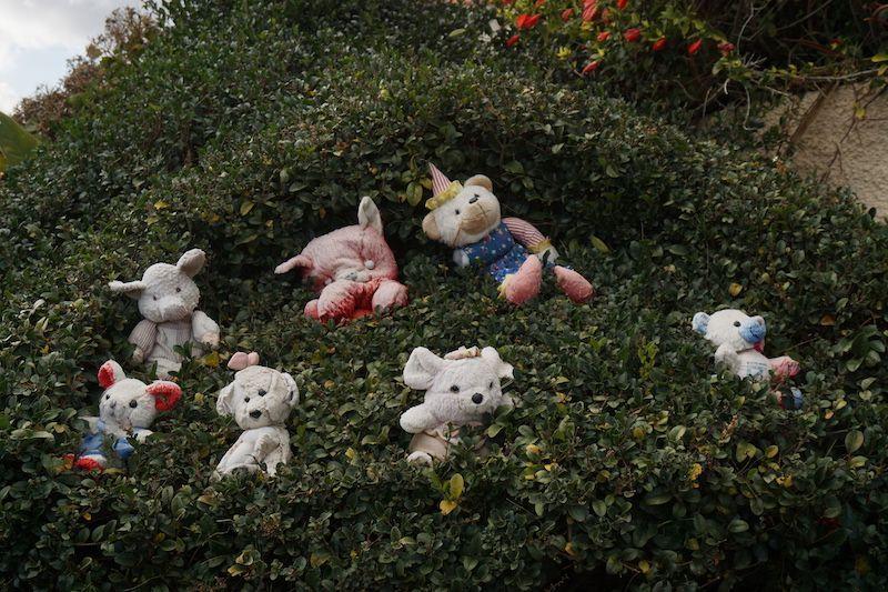 En Ribeira Brava crecen peluches en los arbustos...