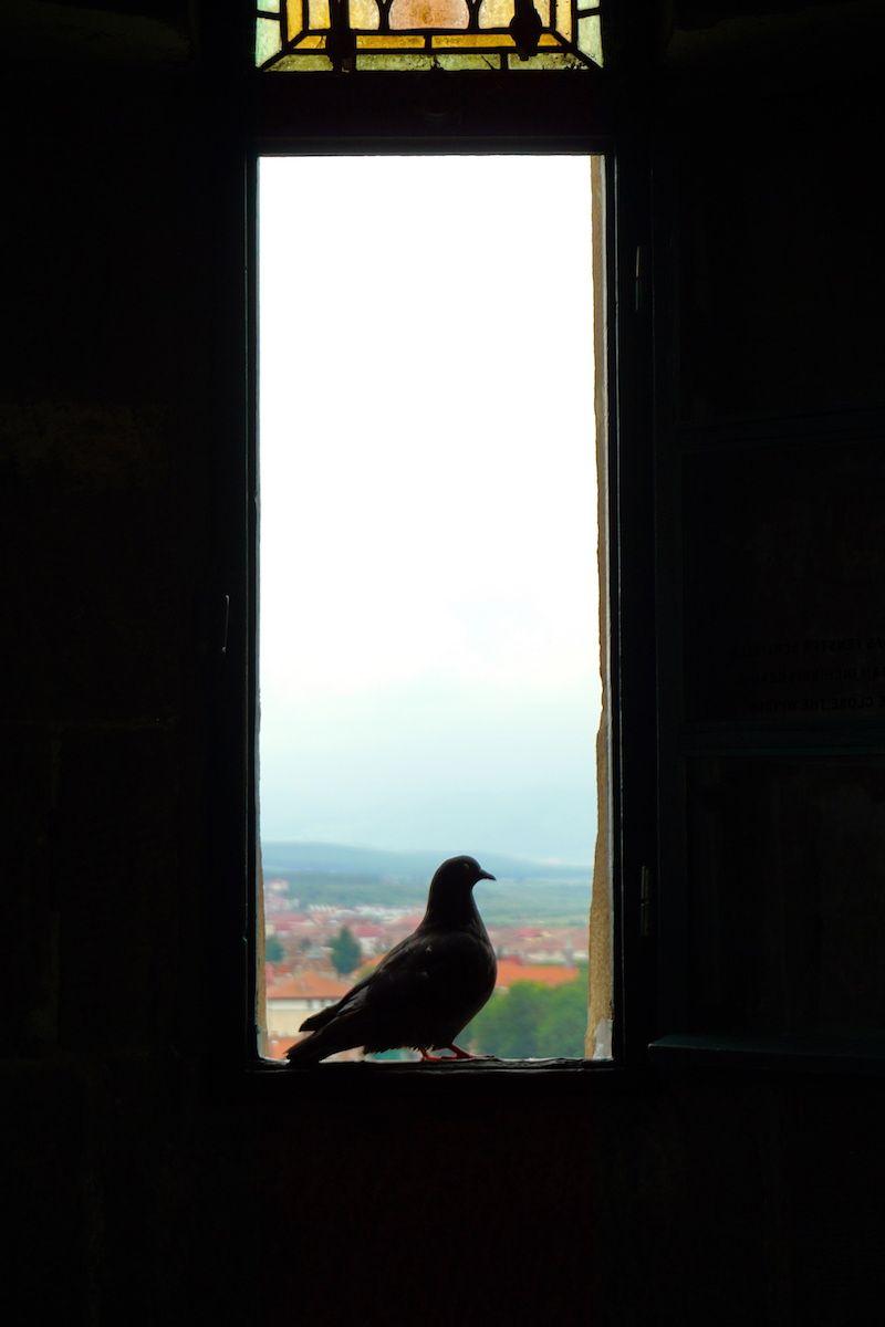 Una paloma rumana disfrutando de las vistas de Sibiu desde la ventana de la Iglesia
