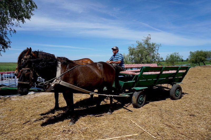 Los pobres caballos que tienen que aguantar con el peso de varias personas