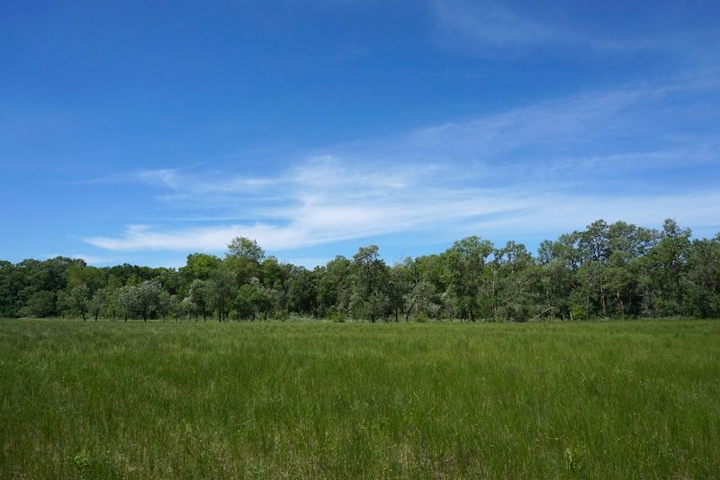 Una zona de duna y vegetación baja en Letea Forest