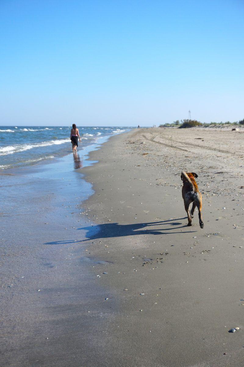 Inês y Zazou (nuestro compañero perruno de viaje) en la playa de Sfantu Gheorghe