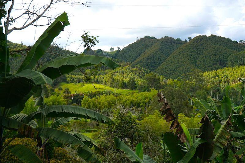 Vistas de las plantaciones de café en la Finca Don Elias