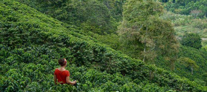 Eje Cafetero colombiano: la guía definitiva. Qué ver, qué hacer, qué comer, dónde dormir
