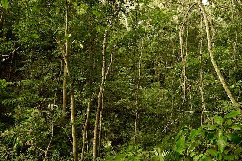 El bosque en el Tayrona