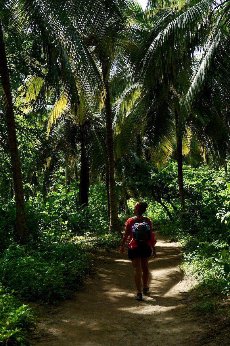 Camino entre Palmeras llegando a Arrecife