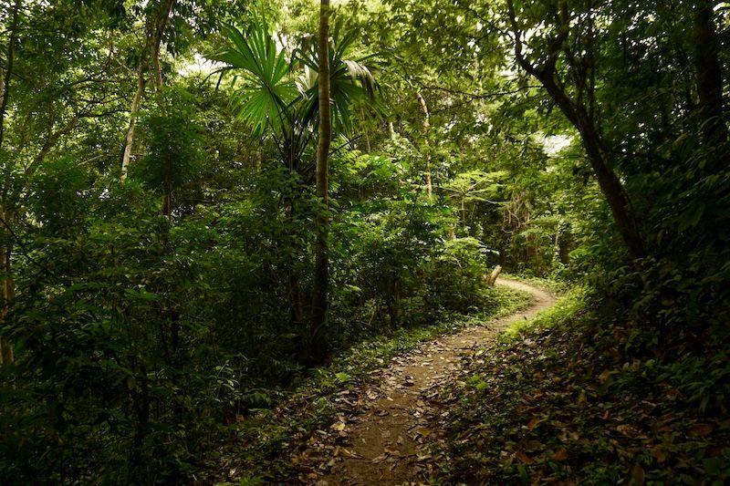 Un camino del Tayrona