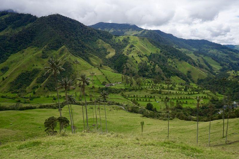 Los miles tonos de verde del Valle del Cocora