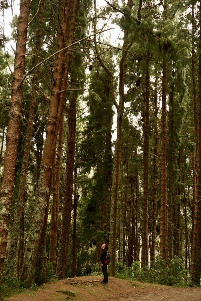 No sólo las palmas de cera son altas en este trekking :)
