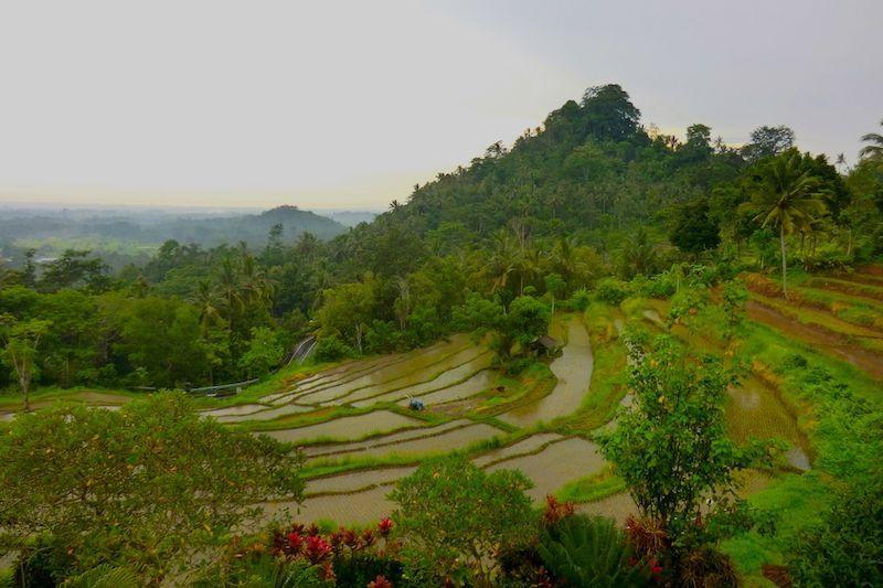 Despedirte de los fotogénicos arrozales de Bali no va a ser tarea fácil
