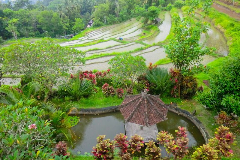 Los fotogénicos arrozales de Bali