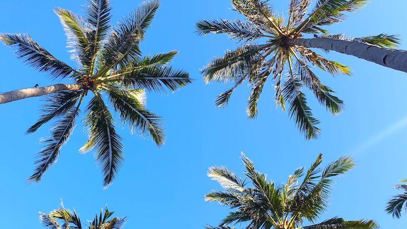 Palmeras en las playas increíbles de Gili Air