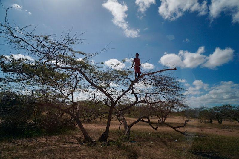 Un niño Wayuu observándonos desde la cima de un árbol