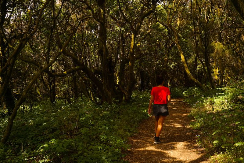 Senderismo por el bosque de hadas de El Hierro: La Llanía