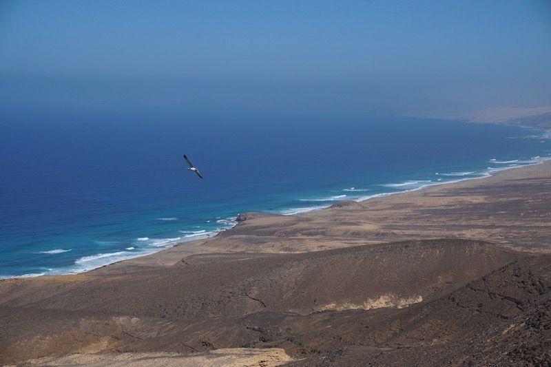 Una gaviota sobrevolando las increíbles vistas de la playa de Cofete