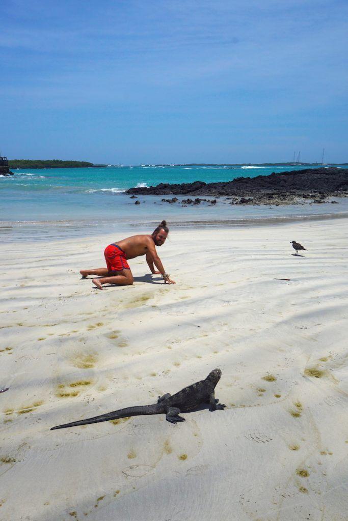 Carrera entre iguana y Chris en Isabela. Ganó la iguana por cierto...