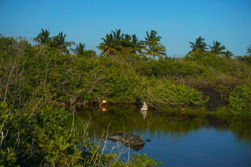 La laguna de los flamencos, un imprescindible que hacer por libre (y gratis) en la isla Isabela