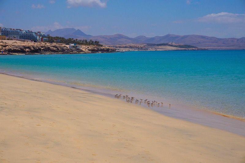 Playa Esmeralda, en la península de Jandía.