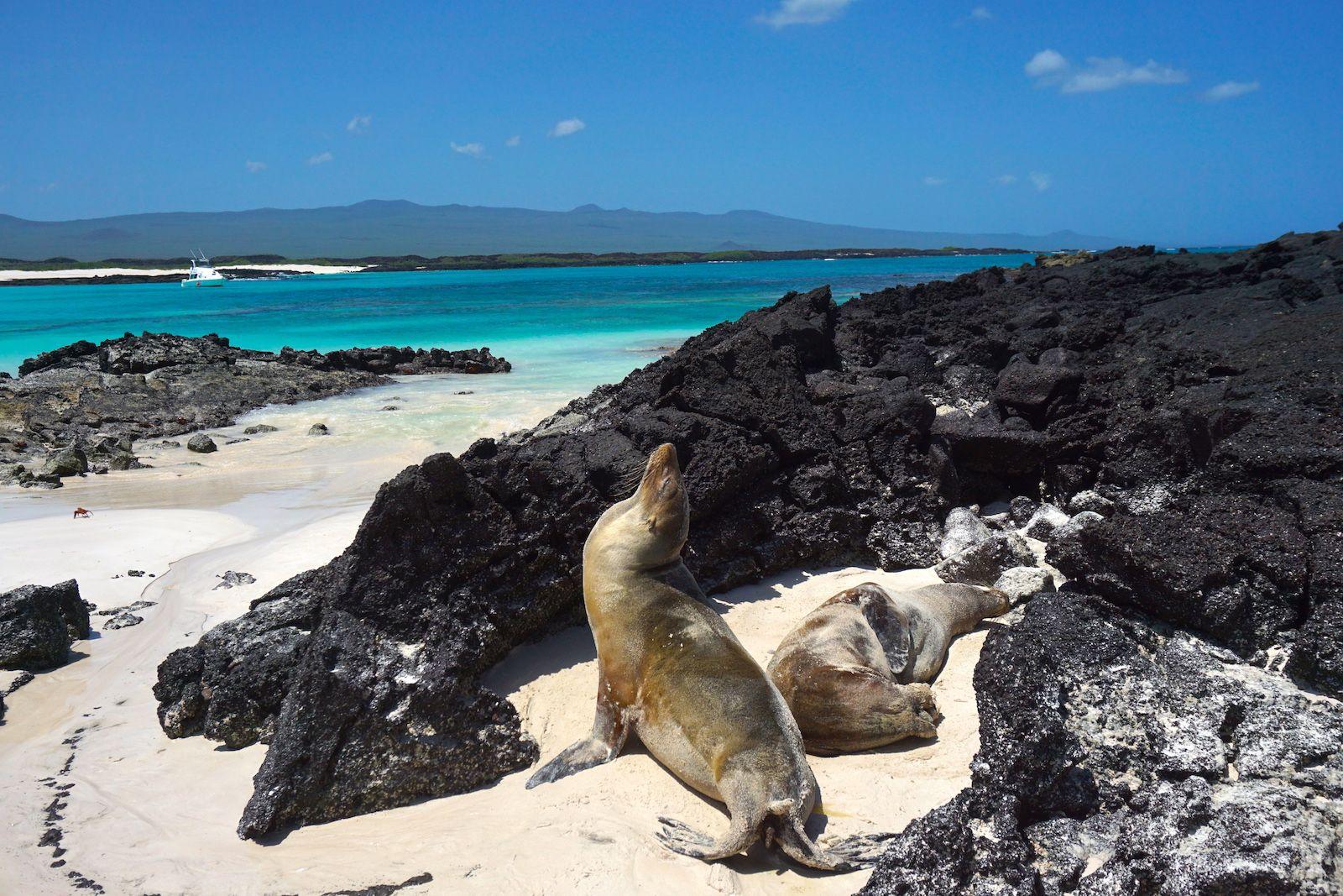 Lobos marinos tostándose al sol en una de las playas más bellas que vimos en nuestra vida, Cerro Brujo.