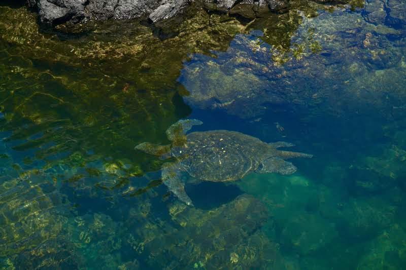 Una tortuga nadando entre los túneles de lava de cabo rosa