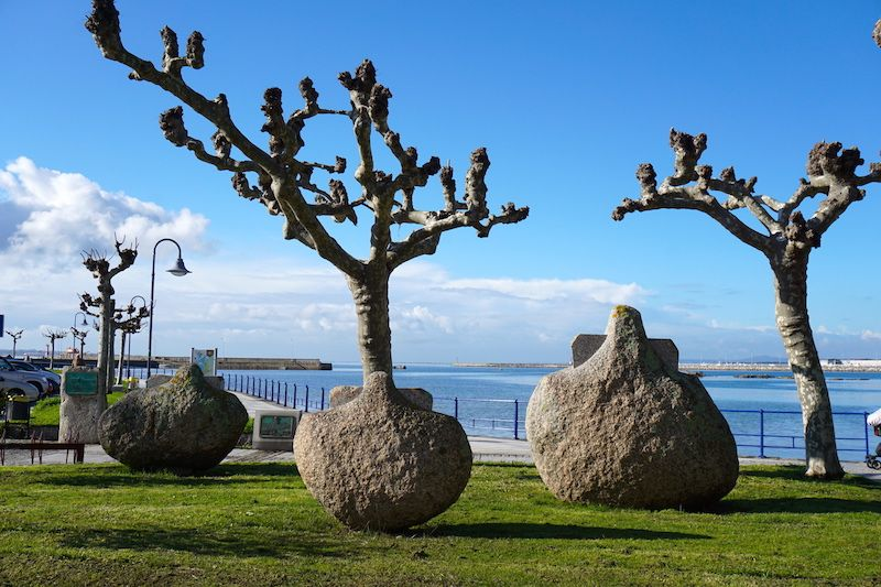 Conchas de vieira por el gran escultor galego Manolo Paz, en Cambados
