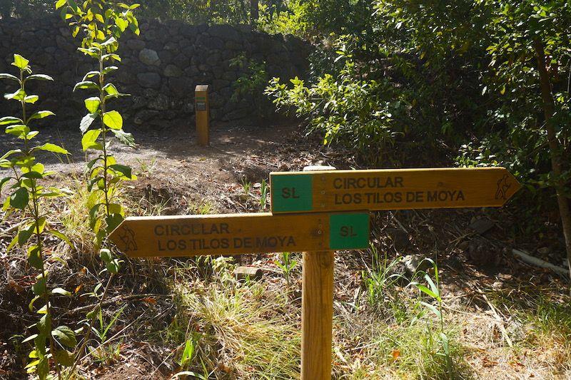 Los Tilos de Moya: una ruta sencilla para todos los públicos