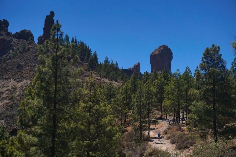 El camino hasta llegar al monolito sagrado es muy bonito, entre pinos canarios